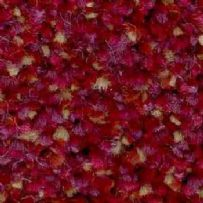 JHS Impervious Cut Pile: Hospi-Style - Raspberry